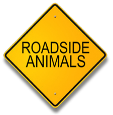 Roadside animals